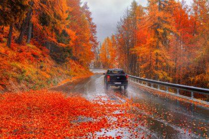 листья на дороге
